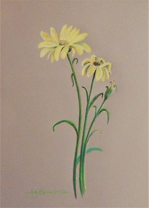 "Wilting Daisies 14""x17"" Faber Polychromos on Bee Kona Paper For Two Buck Tuesdays at Kaleid Gallery 3/19/19"