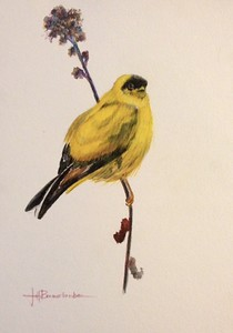 "Yellow Finch 11""x14"" Museum Watercolor pencil on  Fluid Watercolor Block"