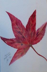 "Sweet Gum Leaf 6""x9"" Colored Pencil on Bee Paper"