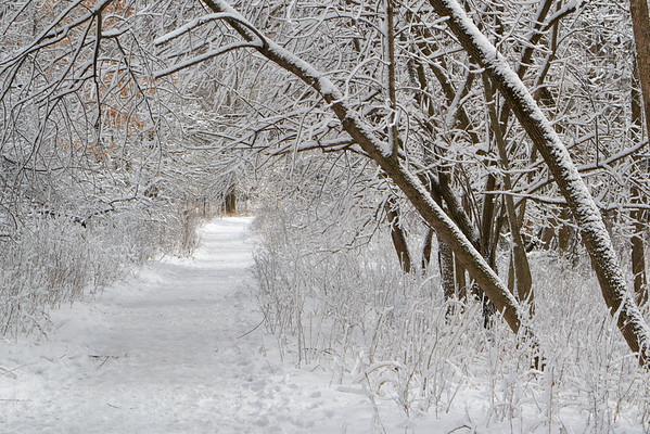 7853 Winter path