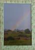 #61 Farm Rainbow (left)