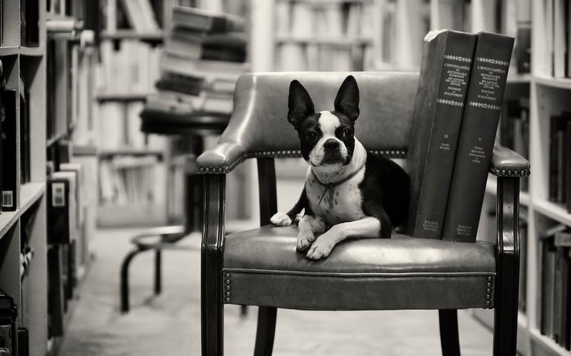 Chien du libraire