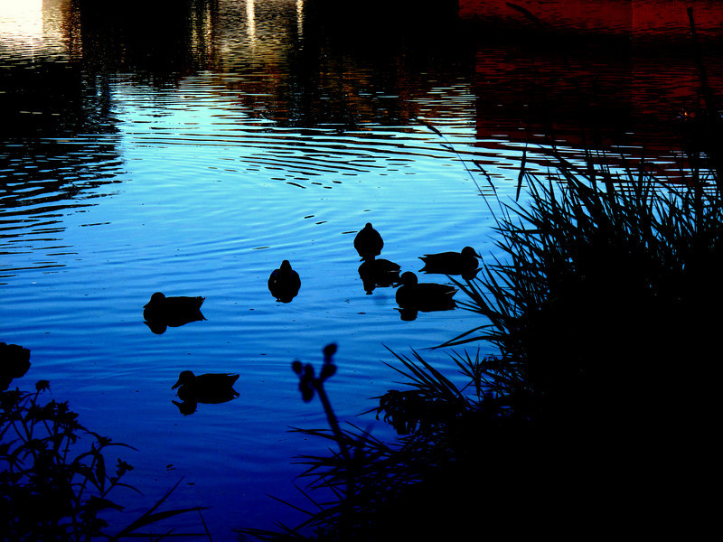 Duck silhouette at the wetland..<br /> Playing with shadow...