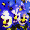 Look closely at these images of pansies, you might see fairies and gremlins and all sorts of other fun things buried in the image.