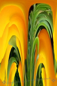 California Poppy Abstract