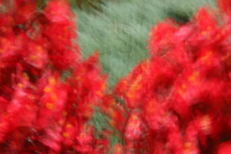 """""""Like a Monet"""""""