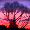 Photo Manipulation..Sunset and Trees