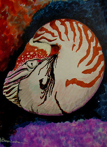 """Monterey Nautilus"" 81/2""x11"" Felt Pen on Rendr Paper"