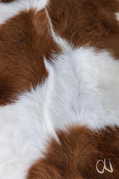 cattle fell, Rinderfell, Rind, Kuh, Schwäbische Alb, Deutschland, Germany