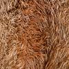 Fuchsfell, Detailaufnahme eines präparierten Fuchsfells (Vulpes vulpes), Deutschland