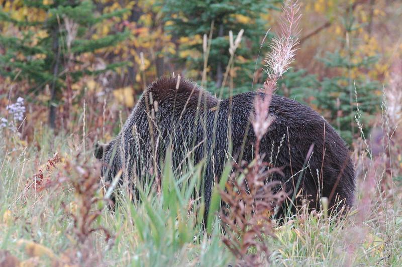 Canadian Rockies, mountains, canadianmountains, banff, moraine, lake, mountian, BC, british columbia, bear, grizzly, ursa, elk, yoho, park, glacier, canada, alberta, kananaskas,