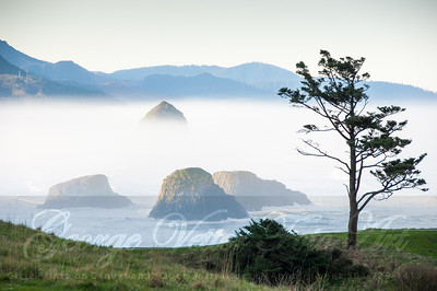 """Fog from Ecola"""