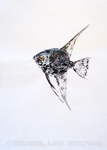 GYOTAKU_ANGELFISH_SAC_CO_CA_2016-03-06_DAN_2500_6088