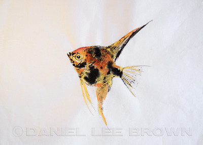 GYOTAKU_ANGELFISH_SAC_CO_CA_2016-03-06_DAN_2500_6090