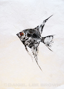 GYOTAKU_ANGELFISH_SAC_CO_CA_2016-03-06_DAN_2500_6079