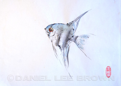 GYOTAKU_ANGELFISH_SAC_CO_CA_2016-03-06_DAN_2500_6082