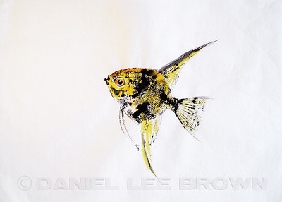 GYOTAKU_ANGELFISH_SAC_CO_CA_2016-03-06_DAN_2500_6089
