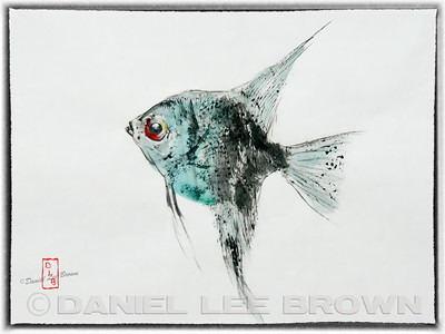 GYOTAKU_ANGELFISH_SAC_CO_CA_2016-02-05_DAN_2500_60681