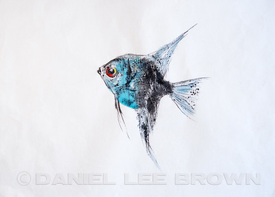 GYOTAKU_ANGELFISH_SAC_CO_CA_2016-03-06_DAN_2500_6081