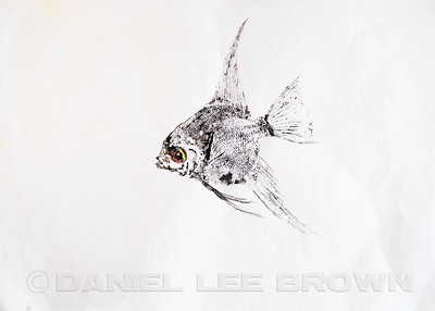 GYOTAKU_ANGELFISH_SAC_CO_CA_2016-03-06_DAN_2500_6085