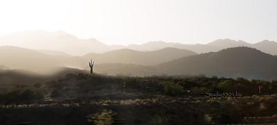 Bumble saguaro 10x24 bee pano0761 0778c