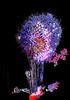 Fireworks purple 2797 FC_ed FrankSandez PL edit1-2sRGB