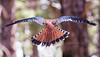 fly away bird back feathers 4484cf DExProC