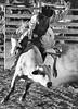 Rider_White bull sRGB B&W 7608eye