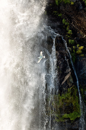 waterfall cf TON  REV_bird_water_DD2_FAVE_7847-1-2 eye