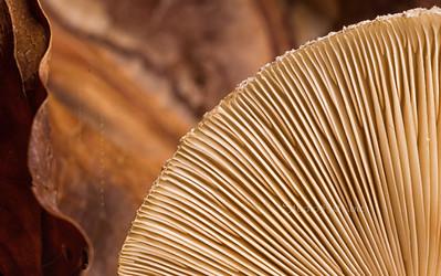 Leaf part mushroom texture 2967cf