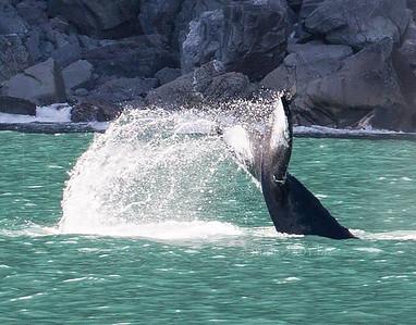 Whale Tail Seward 1596cf ton DEx B&C