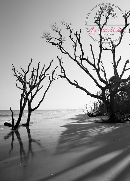 Ocean Tree 2. Botany Bay, Edisto, SC.