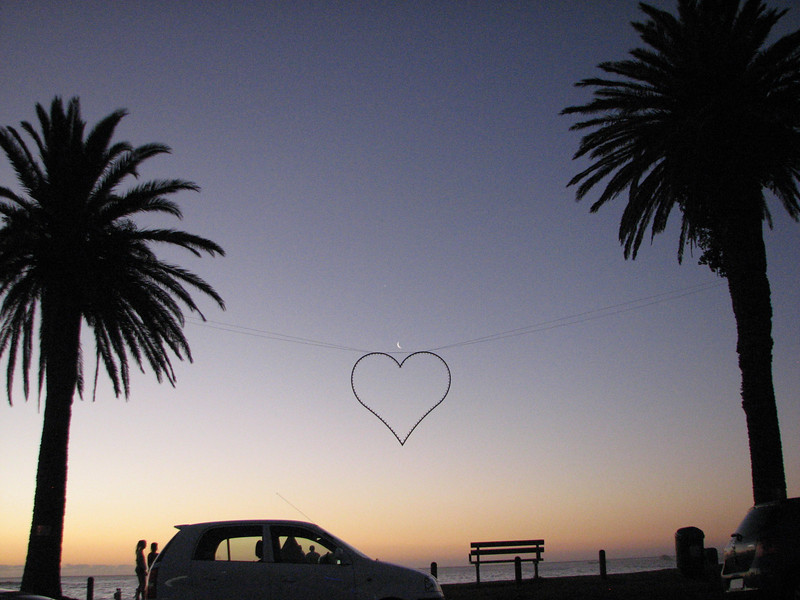 Palm Heart. Cape Town, South Africa.