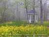 Gazebo and Mustard in Fog