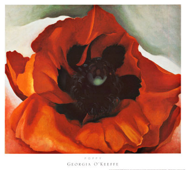Red Poppy (another scan)