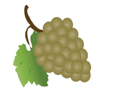Grapes/vector Adobe Illustrator