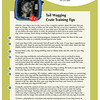 Design collateral material for True Companions Dog Training