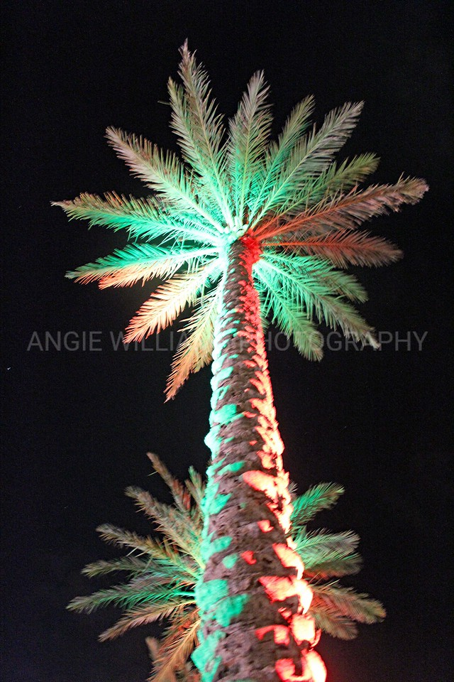 Lighted Palm at the Wharf
