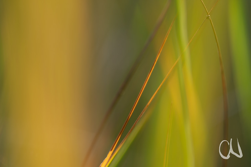 autumn grass 3284