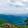 The view from Craggy Pinnacle with Catawba Rhododendrons in full bloom in foreground.