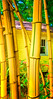 ~Bamboozeled~<br /> Hearts Desire<br /> Village of the Arts<br /> Bamboo; bamboozilla; bamboozeled!  This rare and spectacular variety of bamboo can be seen in the garden at Hearts Desire Boutique & Gallery.  The bamboo is as rare and unique as the boutique.  Truly a find.