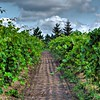 Vineyard Cottage Grove fine art photographer and photography