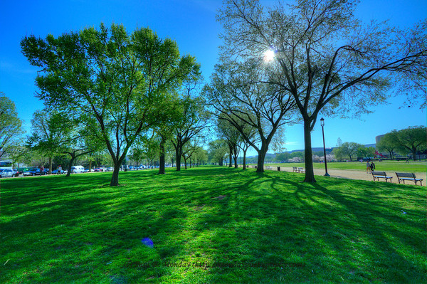 These are more HDR pictures as I tried to catch the brightness of the Spring leaves as they open up.  This picture is along the side of the national mall, glance across the mall and you can see the cherry blossoms ;-)