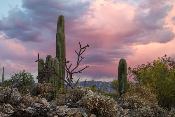 Desert Beauty-2