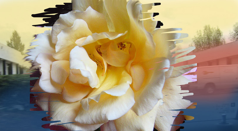 composition: Take time to stop and smell the roses.<br /> Bring the beauty of nature into your workplace.