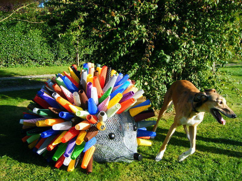 Bamber Hawes ~ Hedgehog with Dasher the lurcher providing a guage of scale
