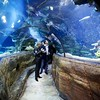 aquarium-london8