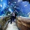 aquarium-london8