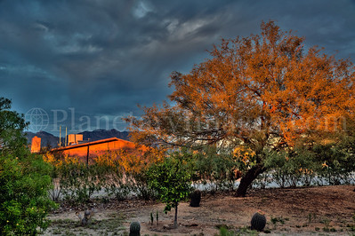 A beautiful orange light painted a house and a mesquite tree in Tucson, Arizona