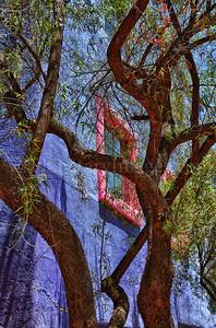 A mesquite tree and a colorful building in Tucson's La Placita Village